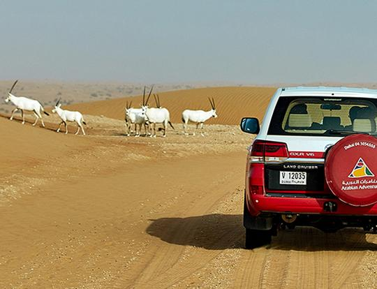Evening Safari For The Whole Family with Arabian Adventures @ Dubai