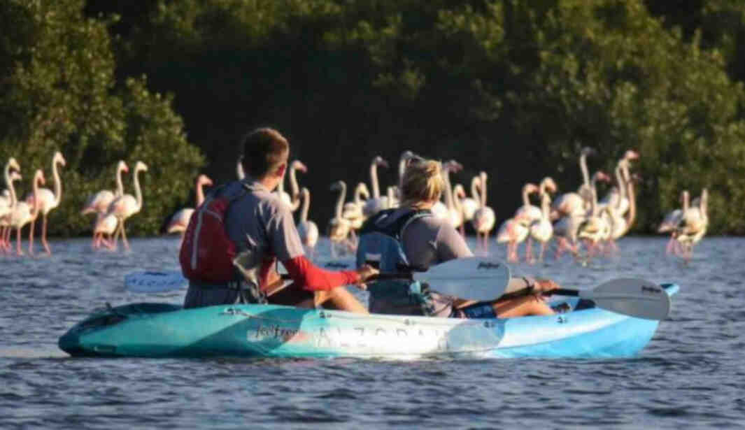 Mangrove Kayak Nature Tours @ Ajman